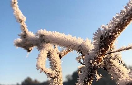 Schlossweinfest in Messelhausen, Garten